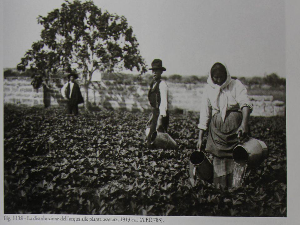storia delle patate dolci di calimera