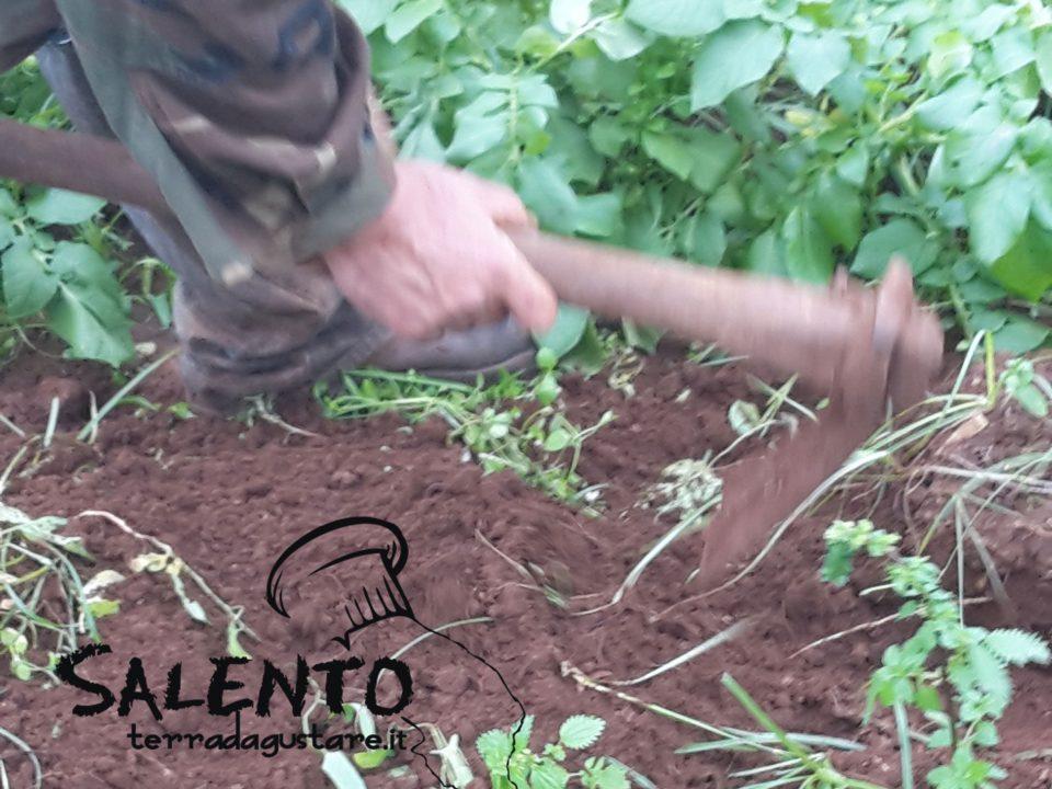 agricoltura naturale senza chimica