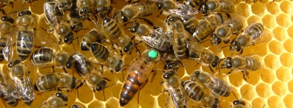 salento e il miele