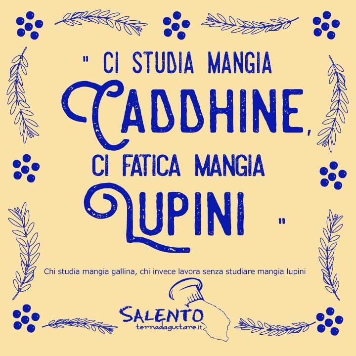 proverbio salentino_ci studia mangia caddhine ci fatica mangia lupini