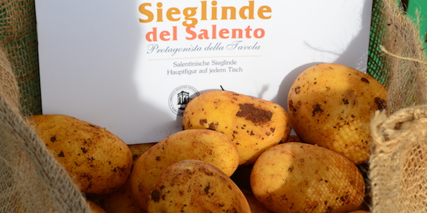 patate salentine